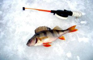 Ловля окуня зимой