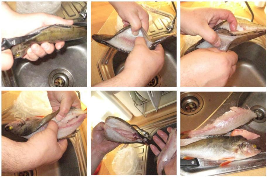 Как почистить свежего окуня