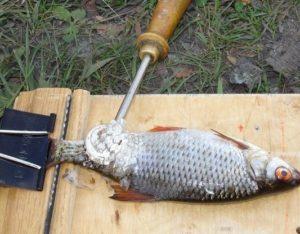 Самодельная доска для рыбы с зажимом