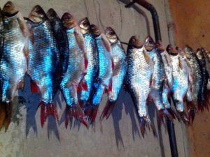 Как сушить рыбу зимой