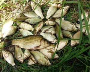 Чесночное тесто для рыбалки